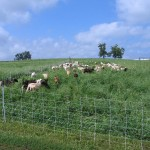 Summer time: the grazing is easy